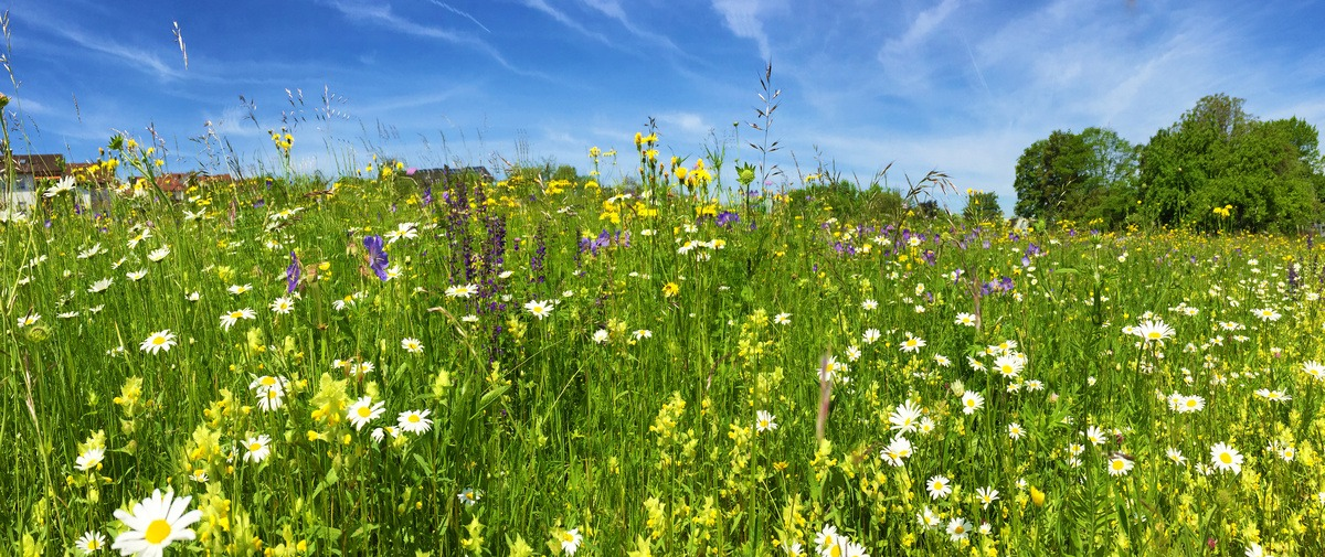 Actions de sensibilisation et d'information des propriétaires de terrains agricoles en friche les 11 et 19 mars 2020